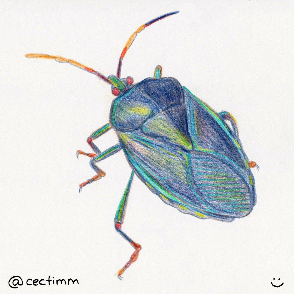 cectimm 2015 02 02 blue beatle
