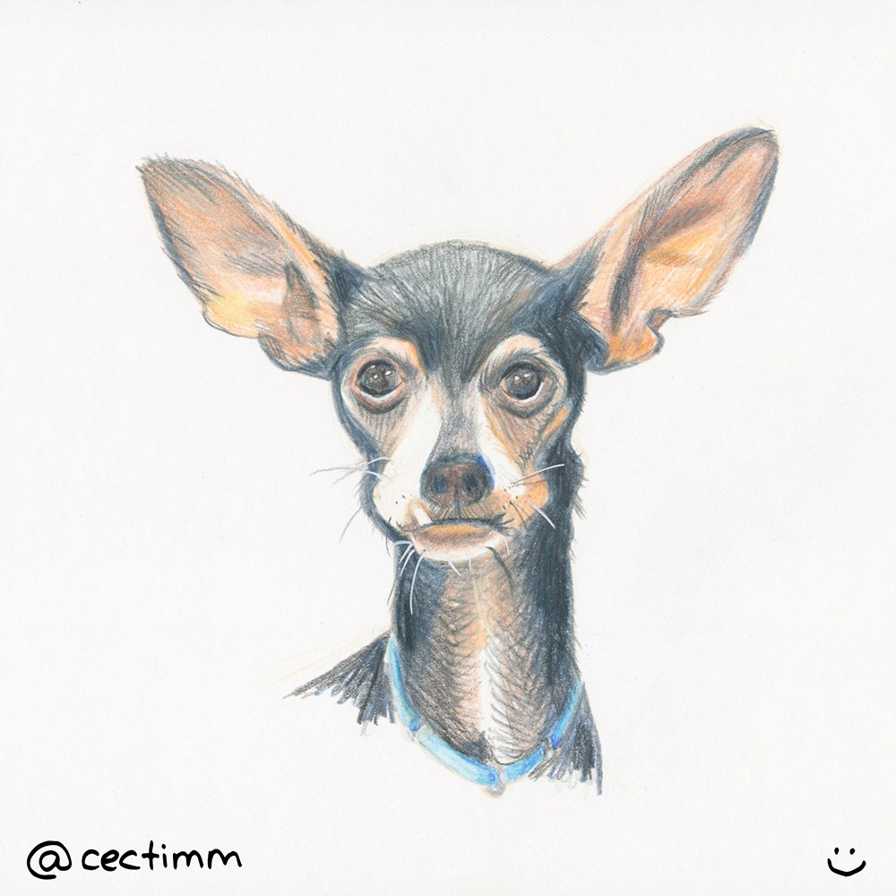 cectimm 2015 02 09 dog with big ears
