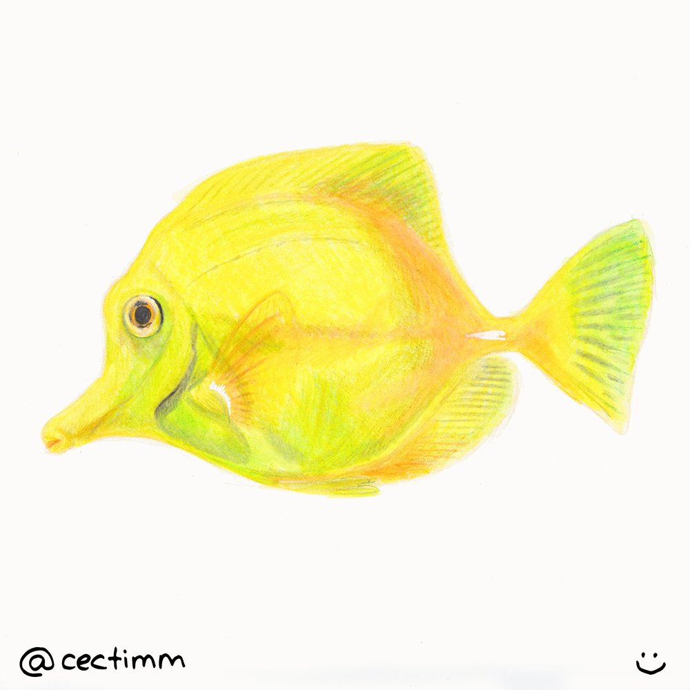 cectimm 2015 02 23 yellow fish