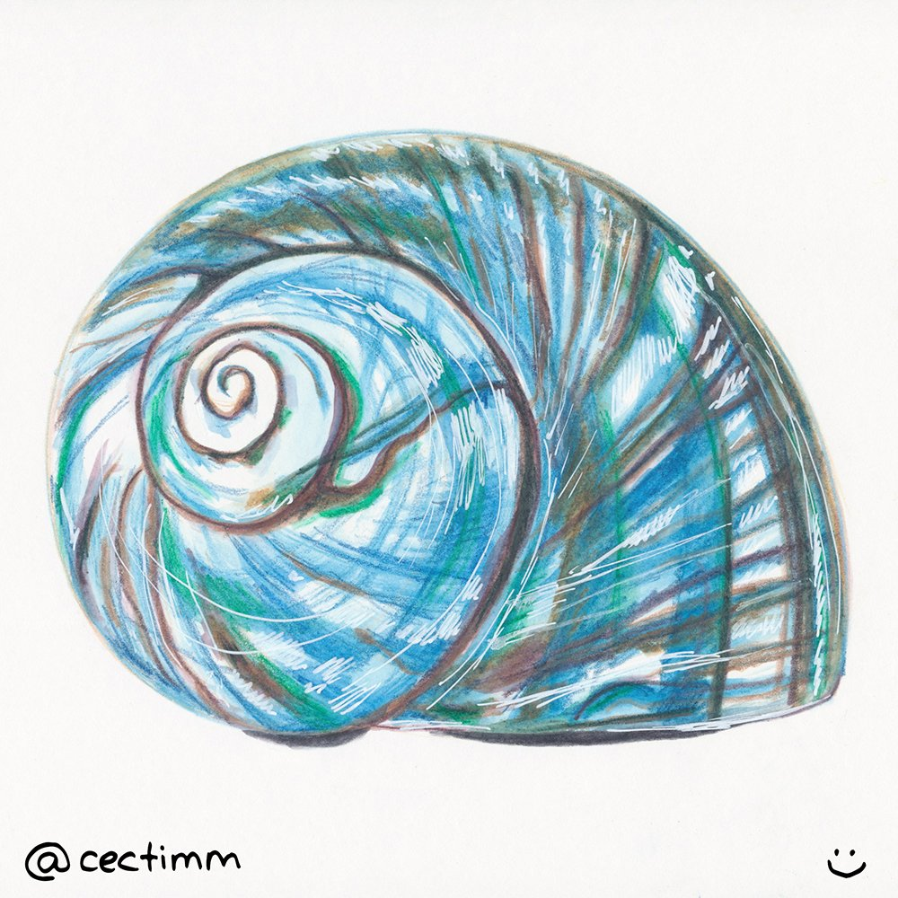 Shell Drawings Art drawing a blue shell - cectimm i creative ...