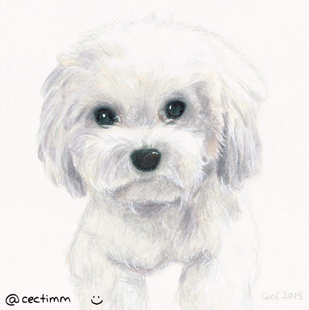 cectimm_Dog_Portrait_December_2015_Bianca