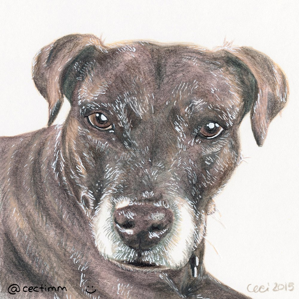 cectimm_Dog_Portrait_December_2015_Ebony_1000