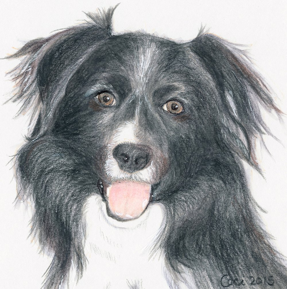 cectimm_Dog_Portrait_December_2015_Sally_1000