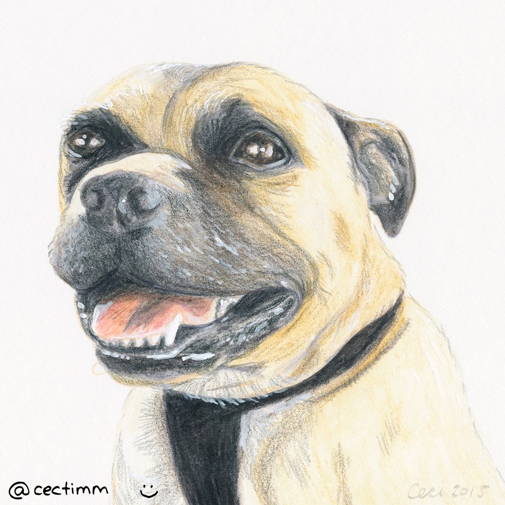 cectimm_Dog_Portrait_December_2015_Sugar_1000