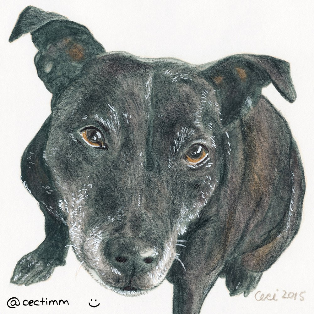 cectimm_Dog_Portrait_December_2015_Tama_1000