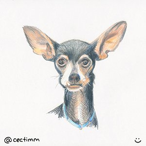 cectimm 2015 02 09 dog with big ears