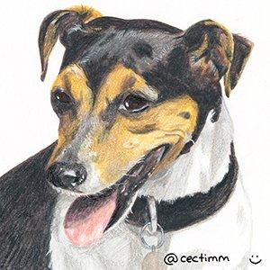 cectimm_Dog_Portrait_December_2015_Halima2_1000