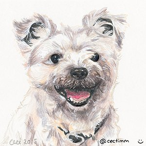 cectimm_Dog_Portrait_December_2015_Sparky_1000