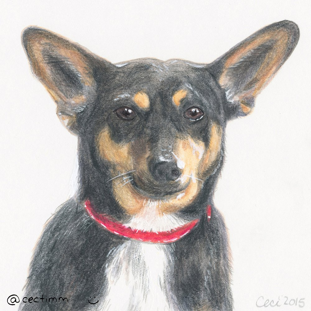 cectimm_Dog_Portrait_December_2015_Turbo_1000 copy