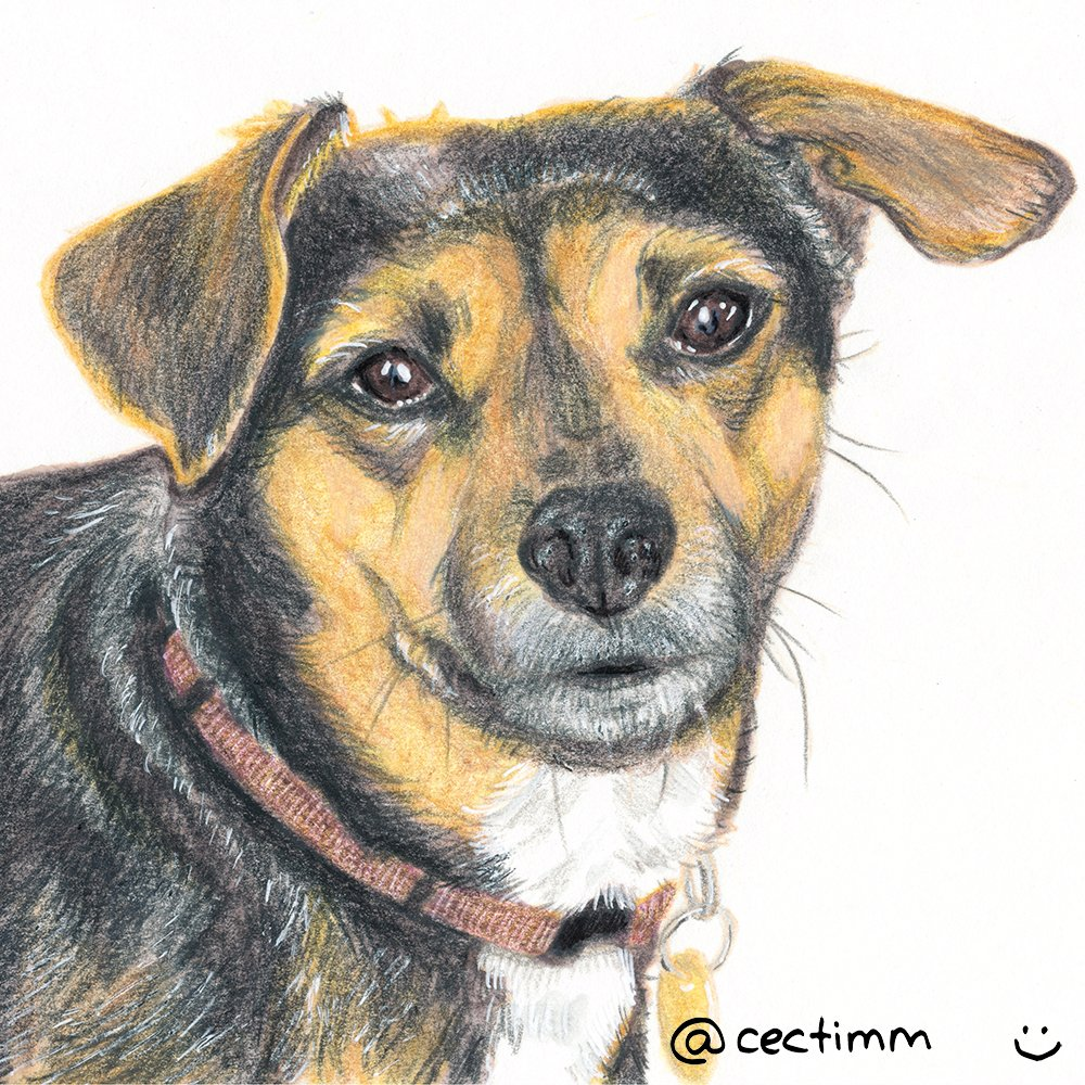 cectimm_Dog_Portrait_December_2015_Halima1_1000
