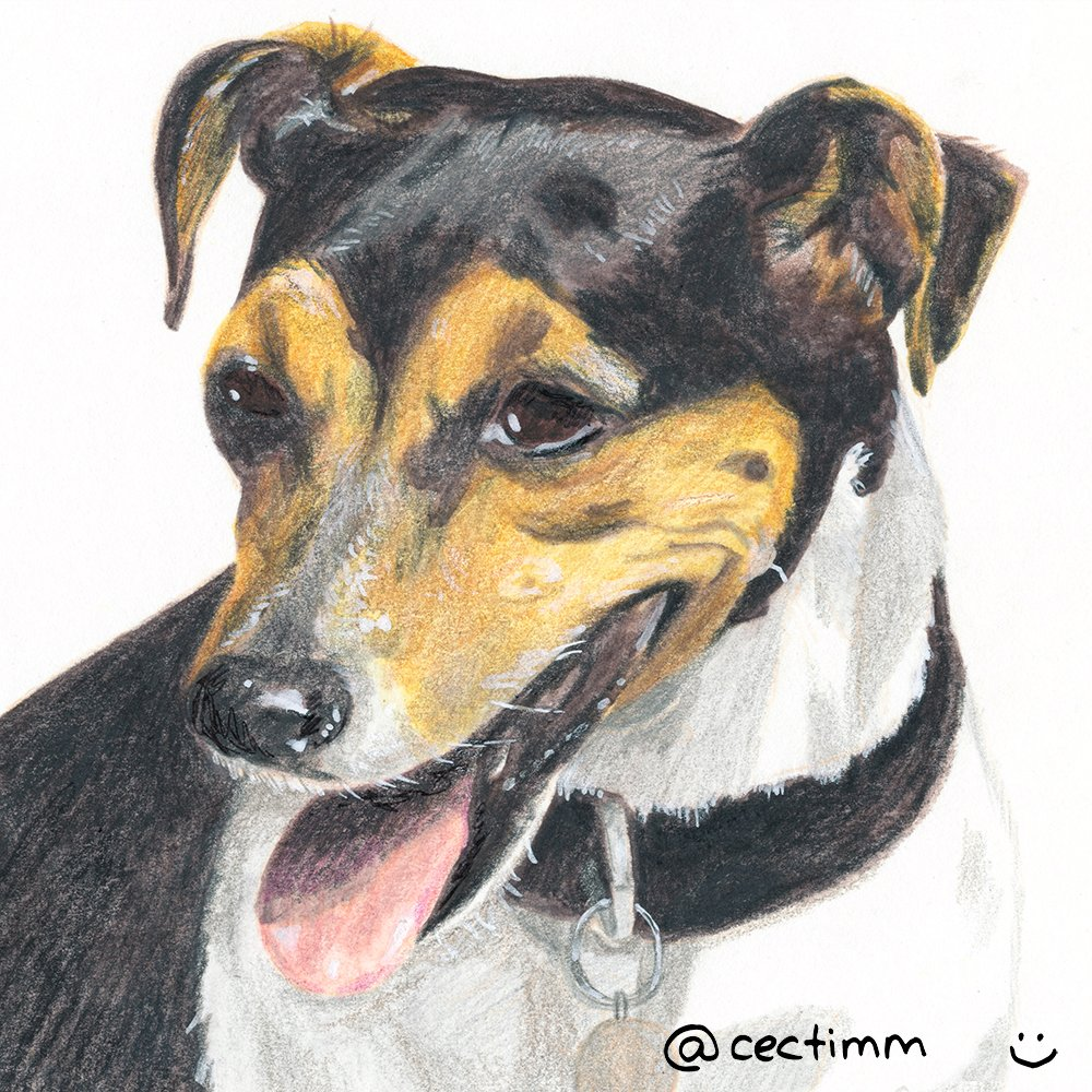 cectimm_Dog_Portrait_December_2015_Halima2_1000