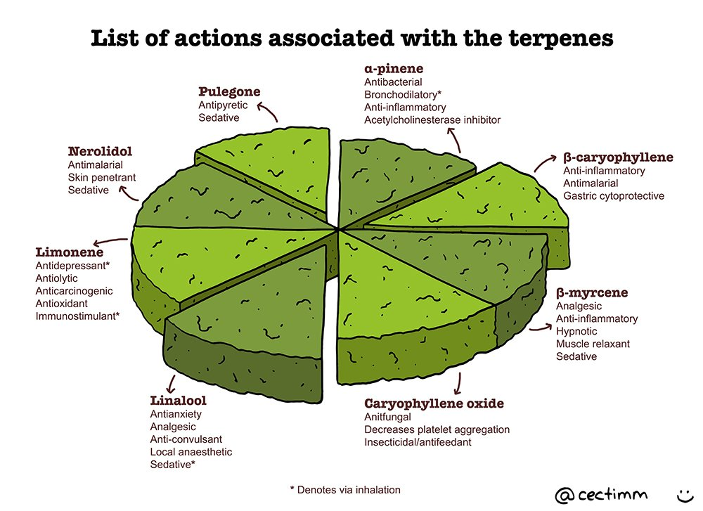 list-of-actions-associated-with-the-terpenes-a