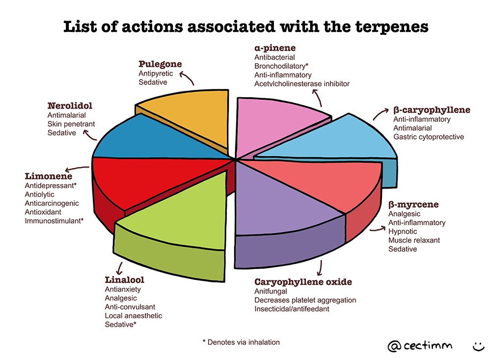 list-of-actions-associated-with-the-terpenes-b