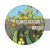 cectimm artist Plants Season 1 Wattle 1.jpb